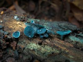Blue elfcup by Oniroid
