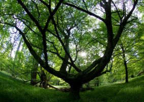 the pirouetting tree: spring by Pippa-pppx