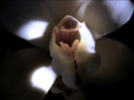 Orchid by PanosPS