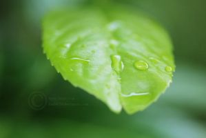 Raindrops 3 by crystalcleargfx