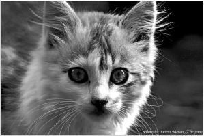 Kitty in BW by brijome