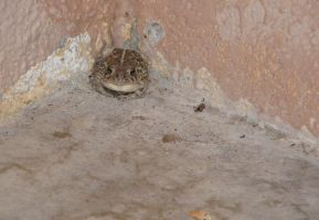 Toad in corner. by jadisofeternity