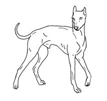Simple greyhound lineart. by jotainsekavaa
