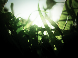 The Grass and the Sun 6 by Hvan