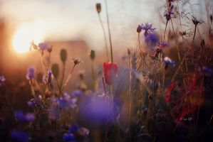 Sommerwiese by Lain-AwakeAtNight