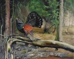 The wood grouse by Marekcech