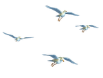 Flying Birds 01 PNG Stock by Roys-Art