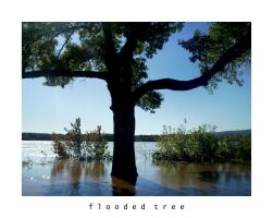 flooded tree by Bloody-Lover