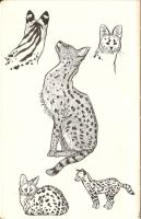 Serval Studies by DrummerGirl375