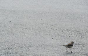 Bird In The Parking Lot II by WolfDagger369