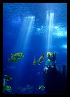 Underwater Dream by nunovix