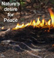 Nature's desire for Peace by 0Novem0