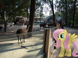 Fluttershy at the Zoo by xLollipopz