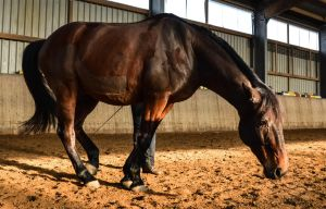 Free Dressage- Playing Sick by LuDa-Stock