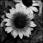 Black And White Nothingness by Mr-Heli