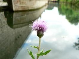 Thistle and Barge by Llesidhe
