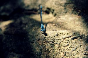 Dragonfly Friend by thepunkexperience