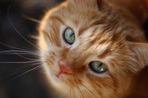 My sister's cat by Draug1