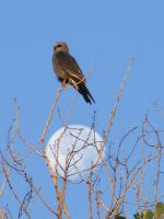 Kite with moon by grlgeorge