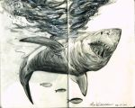 Shark sketch by NickMockoviak