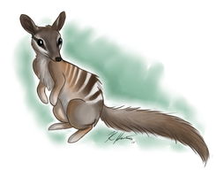 Numbat OMG by Krissyfawx