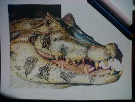Crocodile with markers by David De Leon Luis by Daviddleonluis