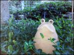 Froggy by WhenPigsFry