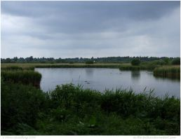 Strumpshaw Fen by In-the-picture
