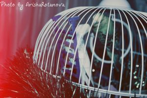 Parrots are fall in love. by ArishkaRotanova