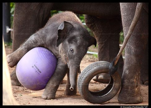 Clumsy Baby Elephant II by TVD-Photography