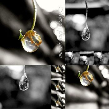 TEARS over Raindrops by girlinmymirror01