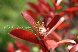 Red and Simple by WildWinyan