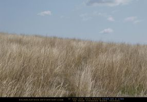 Grasslands 1 by SalsolaStock