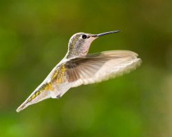 Heavenly Hummer by LarryGorlin