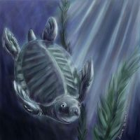 Fly River Turtle - Painter by denn