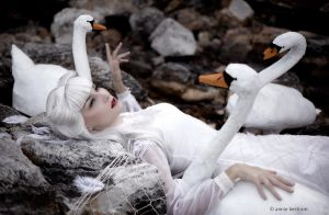 The wild swans by Annie-Bertram