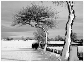 Snow Tree by Stumm47