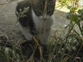 Tabby in the Garden by emmys-stock