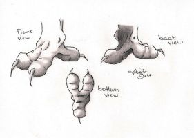 2-Toed Gryffin Foot Reference by Aliryuu
