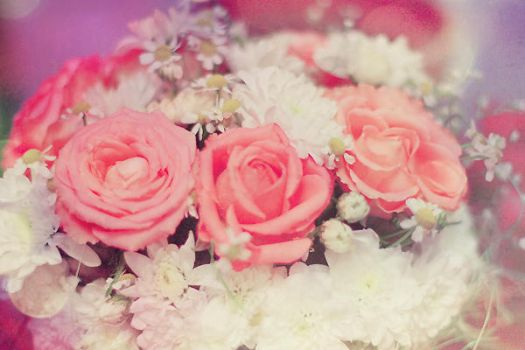 Roses are pink by Likeafairy