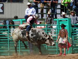 Bull Busting Stock 03 by Rejects-Stock