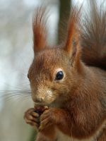 Squirrel 206 by Cundrie-la-Surziere