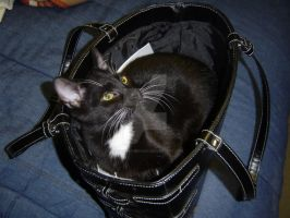 Cat in a Bag by DragonWhisperer1