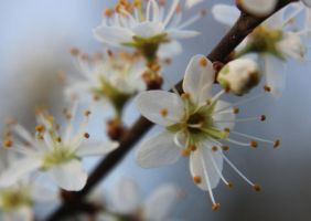 Spring Joy by Caillean-Photography
