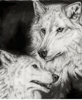 white wolves by shadowfax82