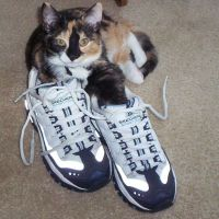 shoes kitty shoes by Cheackitout