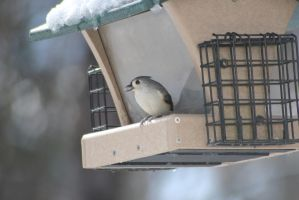 Bird eating a seed at feeder by Irie-Stock