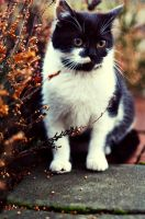 Little cat. by shadddow