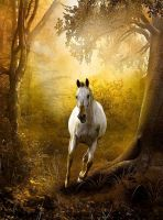 Horse With No Name by VisualPoetress