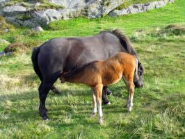Mother And Baby On Dartmoor by drumcrazy779